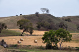 Farm and hay bales