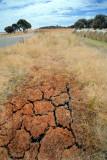 A dry farm
