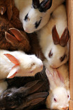 Box of Bunnies.