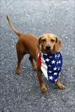 Yankee Doodle Doggie.