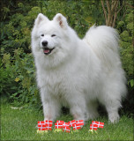 Blanca - celebrating her 14 years birthday