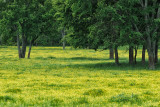 Spring Meadow 2