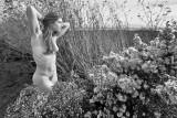 Nude In The Marsh