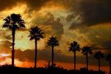 FLORIDA  2003