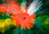_MG_3178   Flower Explosion