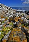 _MG_7352-Colorful Coast