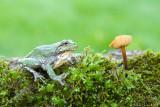 Magic mushroom kingdom