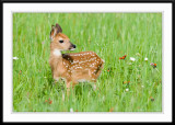 Fawn Alerted