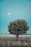 17 July - moon tree