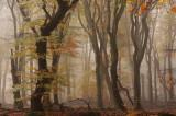 VELUWE, woodland, sanddrift, moorland, fens and brooks