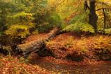 Brook, autumn - Sprengen, herfst