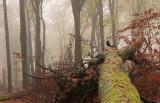 Forest reserve, autumn - Bosreservaat, herfst