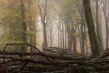 Forest reserve, fog - Bosreservaat, mist