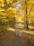 Golden dog and trees
