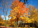 Losing leaves left...
