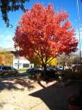 Art house red tree