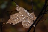 Gentle Autumn Rain