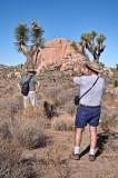 Two Joshua Tree hats