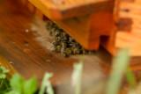 Bee problem?