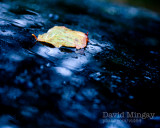 Oct 22: Out in the wet & wild