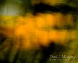 Oct 28: Autumn abstract