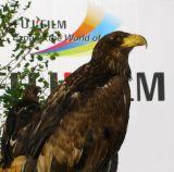 Falcon at Photokina.
