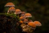 Orange fungi.jpg