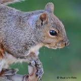 20081101 536 Squirrel.jpg