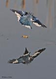 20081108 096 Blue Jay SERIES.jpg