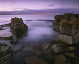 Twilight Daisy Rock
