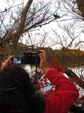 Donna Photographing Cormorants