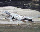 Costa Rica-2003