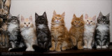 Pepper's Family - Cassiopeia coons