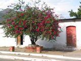 Casas Antiguas en el Casco Urbano