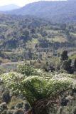 Vista al Oriente sobre la Sierra de las Minas