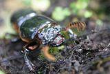 Insecto Habitante del Area