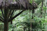 Mirador de El Salto, entre la Selva