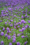 Flowers Farm (3)