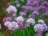 Flowers Farm (7)