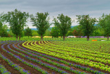 Flowers Farm (9)