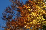Automne - Fall