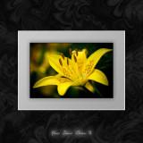 Your Basic Flower II.jpg