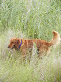 And explore in tall grasses