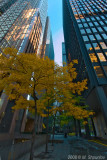 Fall Colors of City - Toronto Downtown