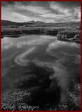 clouds in a bog pool.jpg