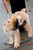 a cute canine walker