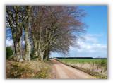 Road to Morton Lochs