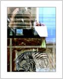 Wildlife Photo-Safari