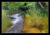 Racó del riu de la Sénia