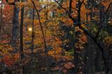 Rowe Woods Sunset